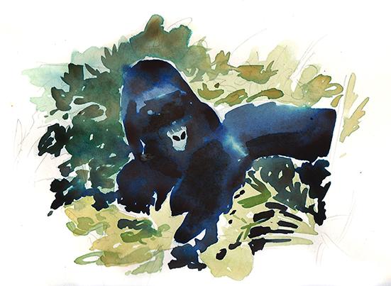 Virunga_Mountain_Gorilla