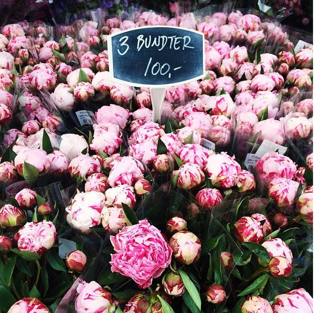 Nicole_Baas_flowers