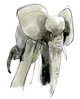 Denis_Clavreul_elephant-15
