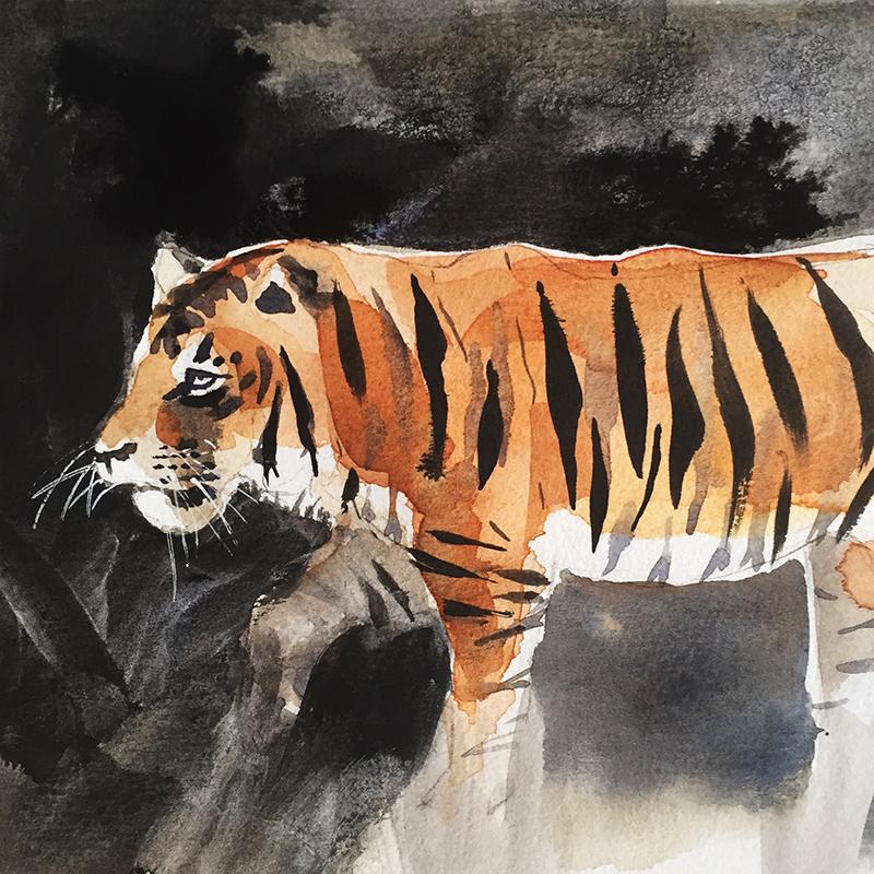 Haley_Mistler_tiger_illustration